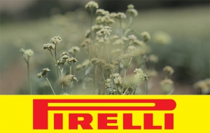 Pirelli Makes UHP Tire from Guayule Rubber